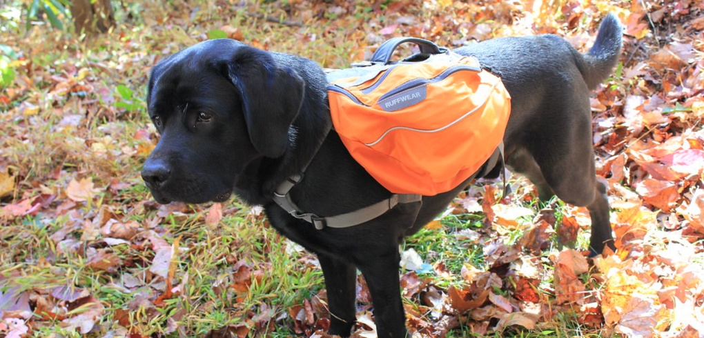 Best Dog Backpack