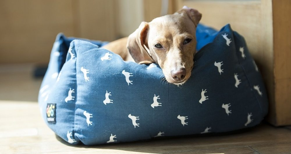 Things to Consider Before Purchasing The Best Dog Bed