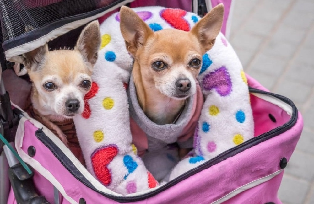 Things to Consider Before Purchasing The Best Double Dog Stroller