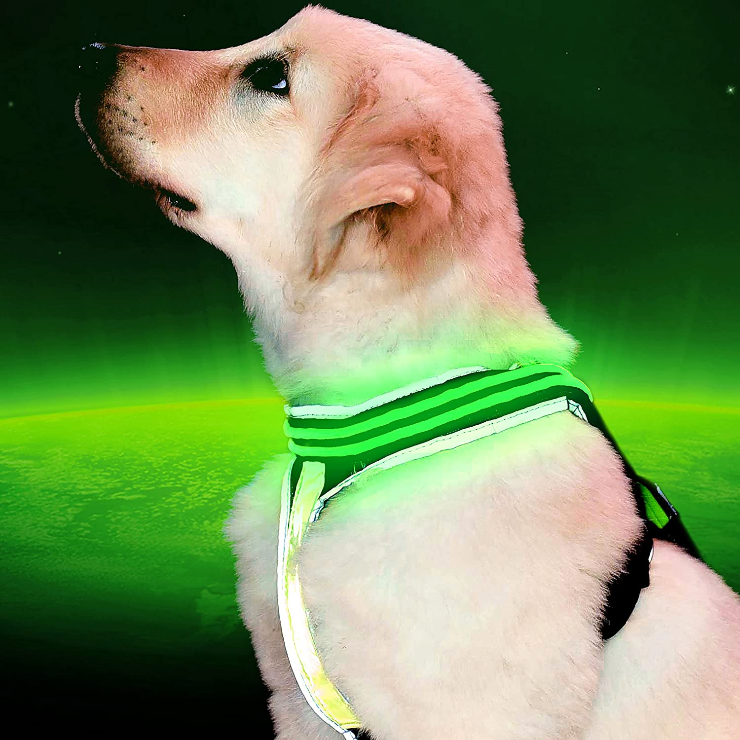 Pet Industries Reflective LED