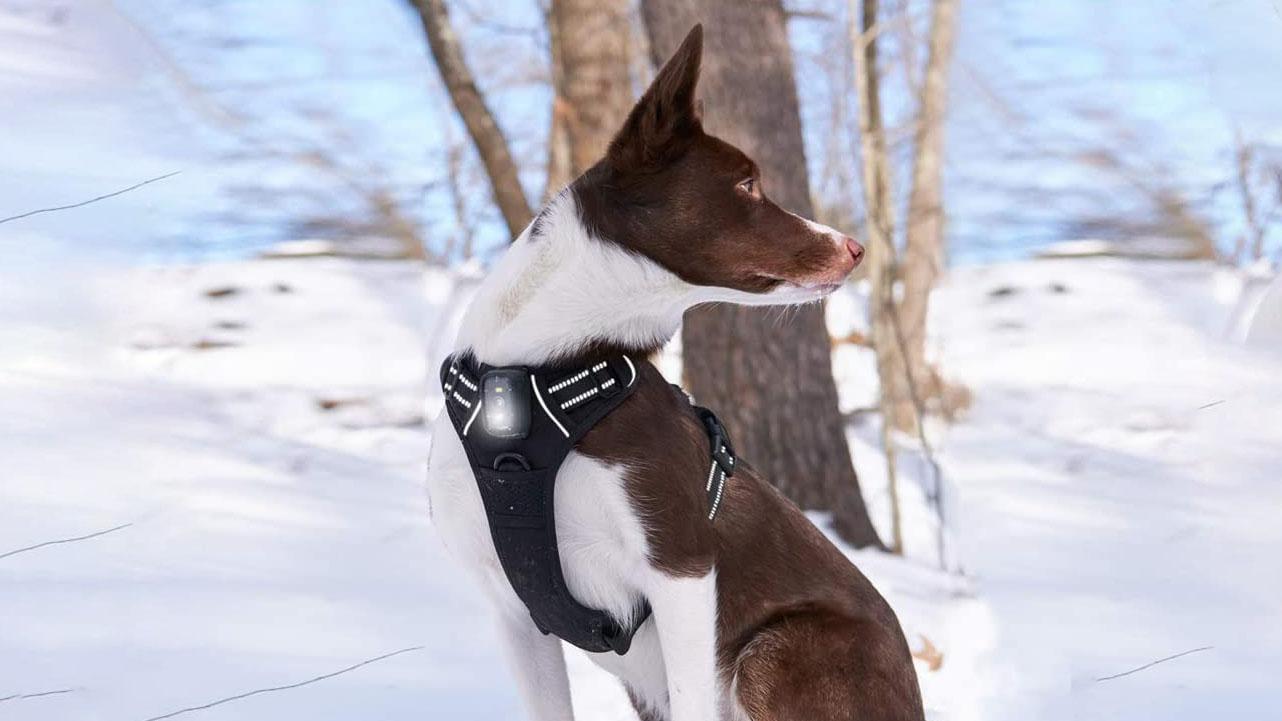 Best LED Dog Harness (Light Up)