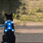 Best LED Dog Harness (Light Up)