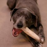 Best Rawhide Chews for Dogs