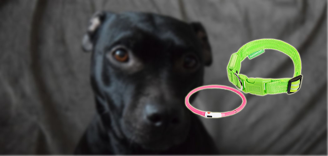 Best LED Dog Collar